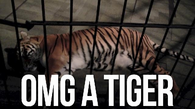 Because Sometimes You Bring A Tiger To A Video Game Press Event