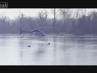 A Helicopter Blows A Trapped Deer To Safety