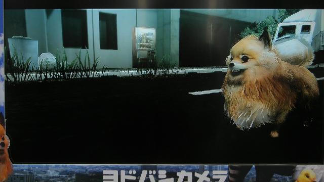 It's Like Metal Gear, Metal Gear… Pomeranian